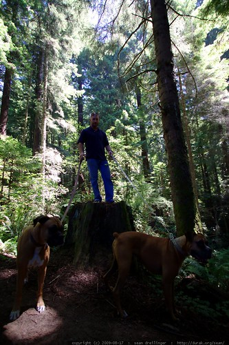 walking in the humboldt redwoods - _MG_1129