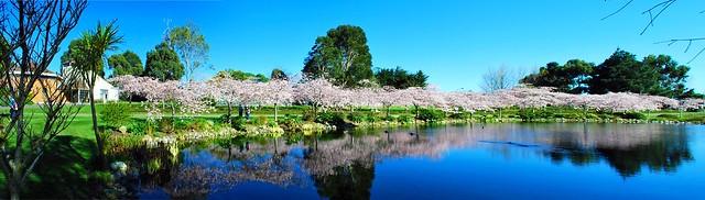 Sakura@IPC