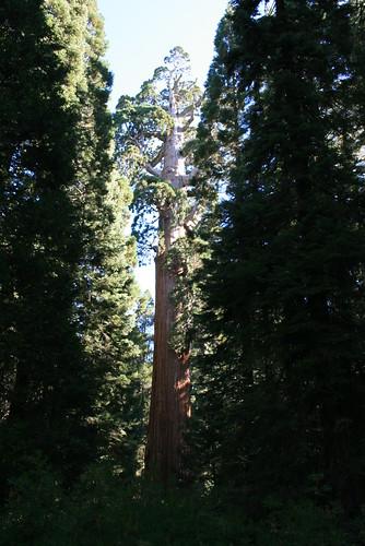 General Grant Sequoia