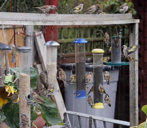Birdy Bistro