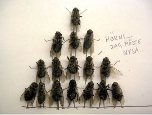 dead-flies-art-9