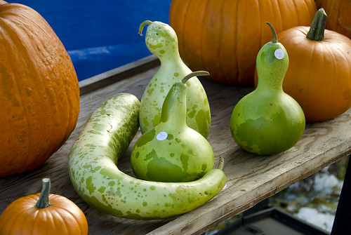 Colourful gourds on Flickr by Plonq