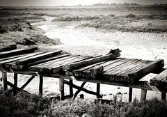 Los Toruos (Haddhar) Tags: bridge way puente camino marsh lowtide cdiz marisma traviesas mareabaja toruos bahadecdiz