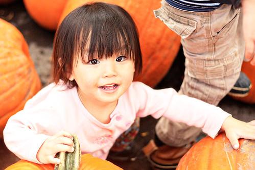 pumpkin patch 180