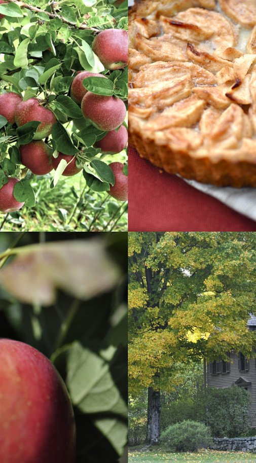 apple picking collage