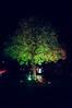 Baum sein.
