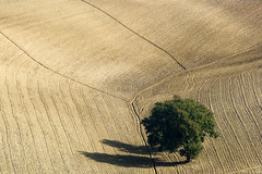 Aratura (Massimo Feliziani) Tags: landscape italian nikon italia paesaggio coltivazioni aratura d700 thesecretlifeoftrees