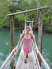 Curu reserve mangrove swamps
