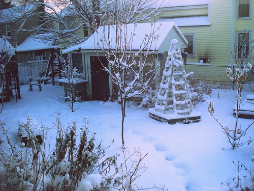 snow-covered garden