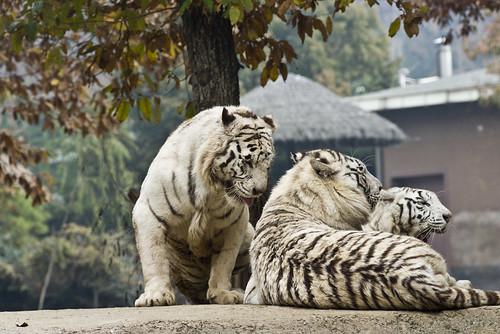 愛寶樂園 動物 韓國之旅 day2