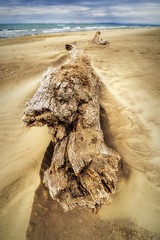 I (Le***Refs *PHOTOGRAPHIE*) Tags: mer france beach sand nikon south sable tron arbre plage hdr bois mediterranee d90 legrauduroi lespiguette 1024mm lerefs