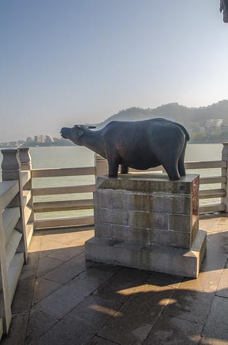 Guangji Bridge Water Buffalo