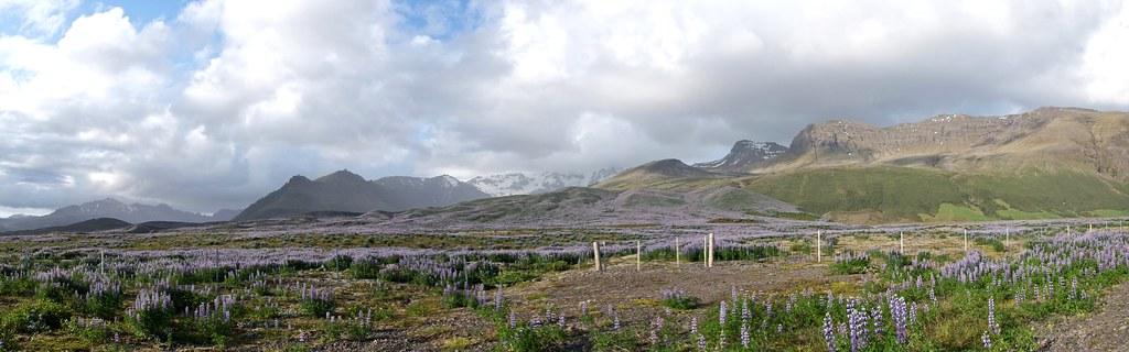 Dans le sud, peu après le Jokusarlon  -lac glaciaire- et ses mini icebergs