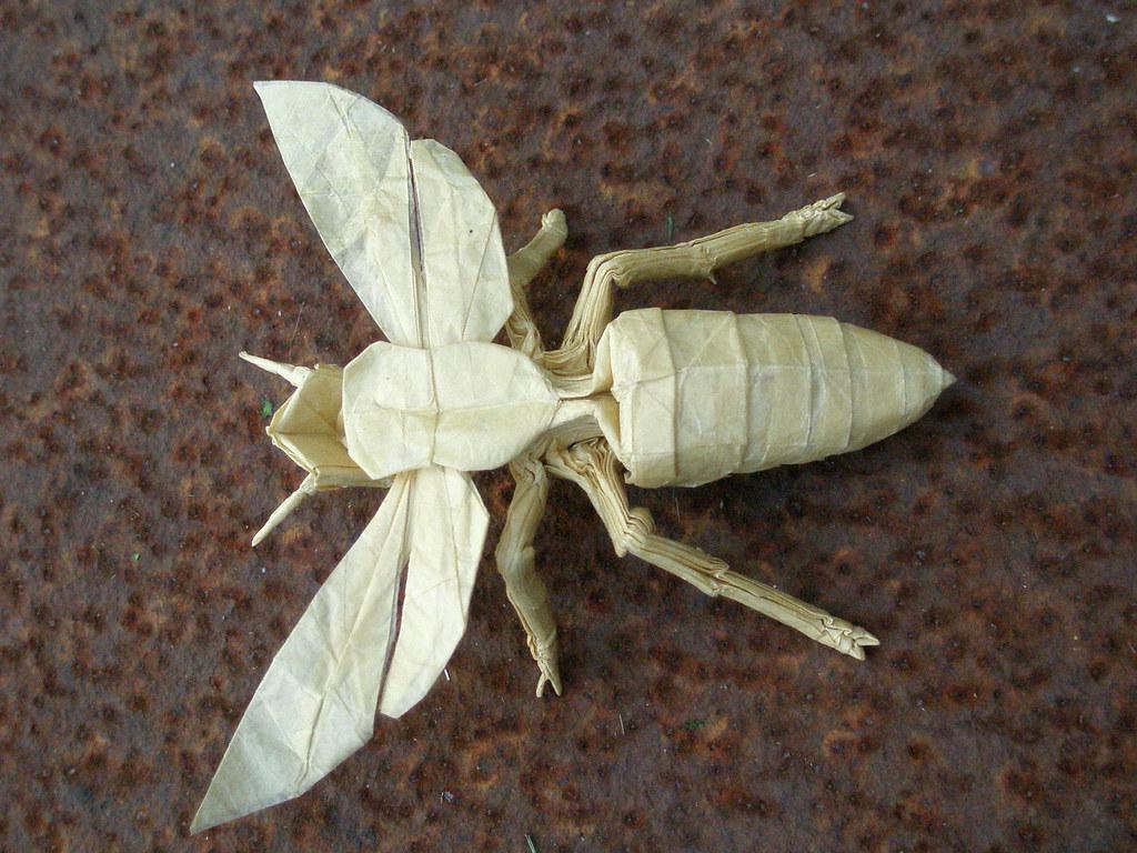 Wasp 26 By Kamiya Satoshi Folded Artur Biernacki Arturori