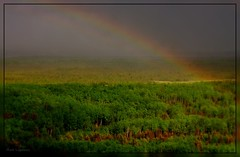 Rainbow over the Forest (Mark Lagerweij) Tags: trees canada green rain forest canon geotagged rainbow colours framed geocoded border gimp helicopter alberta gps opensource legacy spruces rosepetal lettherebelight kipi fortmcmurray digikam coth clck beautifulshot inux perfectcomposition frameit addictedtophotography beautifulcapture 40d abigfave photolovers amazingphotography amomentarylapseofreason flickraward canadamedal artoflight diamondstars thirdlife thephotodistillery screamofthephotographer freedomhawk paololivornosfriends doubledragonawards photographersworld micarttttworldphotographyawards artofimages dragonflyawards creativeyeuniverse amsterdambloggingworkshop phoddstica addictedtonature mindigtopponalwaysontop dartworks marklagerweij photostoread flickrnoobs