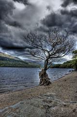 Lonely Tree at Loch Lomond, Scotland (HDR) (www.bazpics.com) Tags: nature scotland scenery multipleexposure hdr highdynamicrange bazpics barryoneilphotography