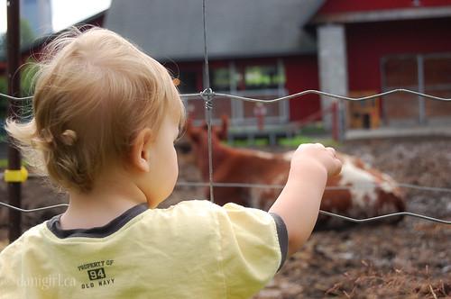 189:365在农场