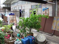 Veranda Garden (Earthworm) Tags: birdcage garden thailand island bangkok pots containergarden kohkret