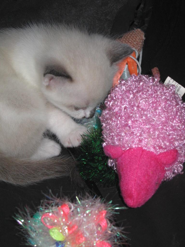 Cloe found the toy bag