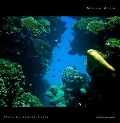 Marsa Alam diving (Andrea Costa Creative) Tags: desktop sea wallpaper fish macro tree art nature water closeup illustration photoshop canon painting creativity photography design interesting marine paint underwater arte post graphic background postcard sub creative myspace powershot comunicazione explore concept retouch ideas retouching disegno sx1 grafica facebook immersion linkedin interessi comunication photorealistic postprocessing fotoritocco windflower bestphoto photoretouching illustrazione metadesign fotorealismo ritocco netlog andreacosta alpitour sx1is sx1best actheart obramaestra socialimg fantaziaresort mygearandmepremium mygearandmebronze mygearandmesilver mygearandmegold areyoureadyforthenewadventure