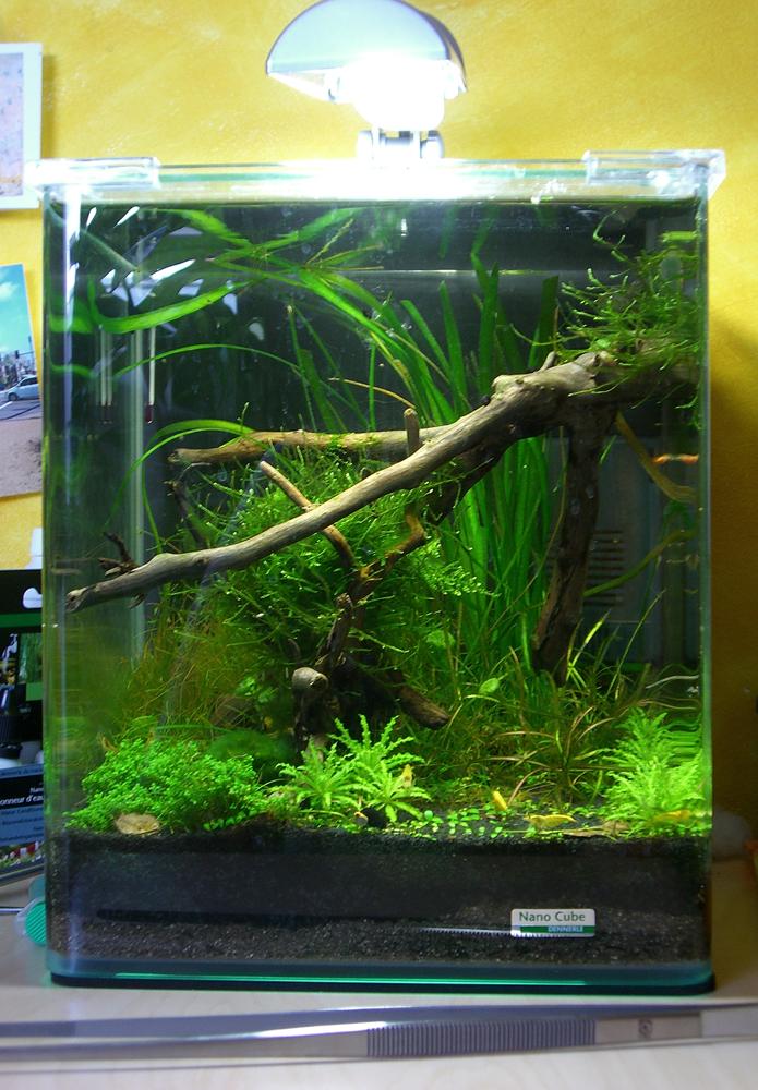 zuviel grünalgen im aquarium