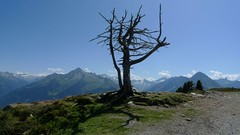 Lonely tree on the Penken (Mayhofen - W1) (Jackie & Dennis) Tags: austria tirol tyrol zillertal mayrhofen penken