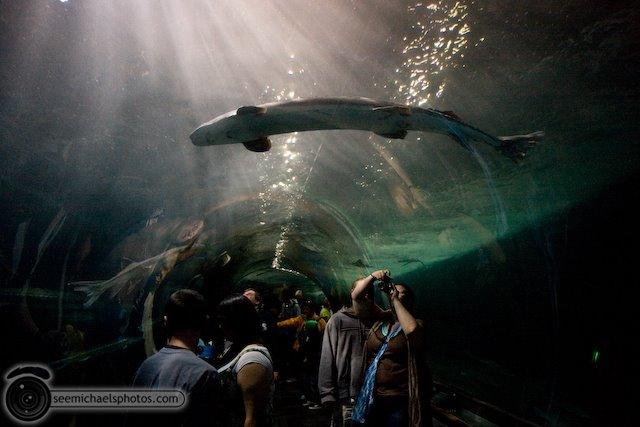 5 San Francisco Aquarium 72009 © Michael Klayman-017