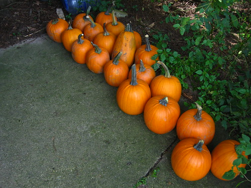 Pumpkins for carving
