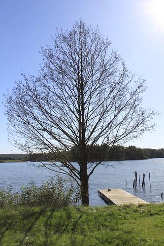 Vėlyvo rudens medis