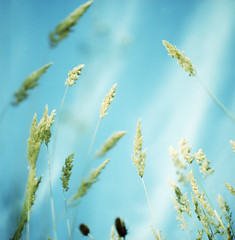 weightless. (Tobias Walter) Tags: blue sky nature grass zeiss munich xpro cross kodak dream cx hasselblad crossprocessing 28 ektachrome e100gx 503 gentle herbage planar dreamin 80mm
