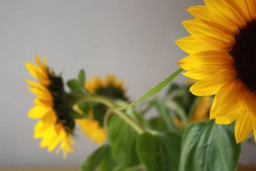 ::yellow::