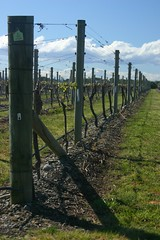 Elephant Hill Vines