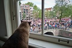 Max watching the gay parade (stijn) Tags: bridge max holland window netherlands amsterdam animal architecture cat europe nederland prinsengracht gaypride canalparade jordaan noordholland looiersgracht brug103