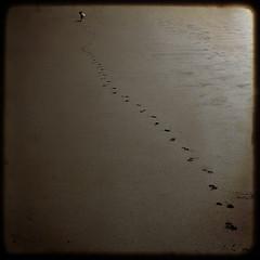 Tula Tracks. (jimbodownie) Tags: africa dog beach sand tracks trafalgar run jackrussel tula thelittledoglaughed