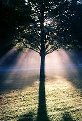 CNV00020 tree (Sam, W) Tags: life light mist art film me beautiful wales digital sunrise 35mm canon asda photography living interesting day photographer image snapshot cardiff photograph moment digitalimage butepark bute samw samsamcardiff samsamwales