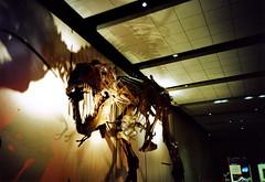 091119 (howard-f) Tags: lomo lomolca lomography lomokompaktautomat lomographer toycamera filmwaster russiancamera sovietcamera  ilovelomo toycam losangeles losangelescountyhistorymuseum stamped nightatthemuseum trex dinosaur dino badbreath bones skeleton prehistoric