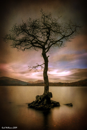Milarrochy Tree (1)