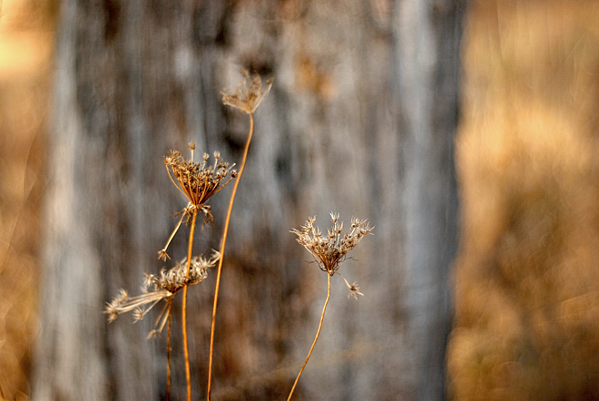 Dried lace, tree and prairie grass
