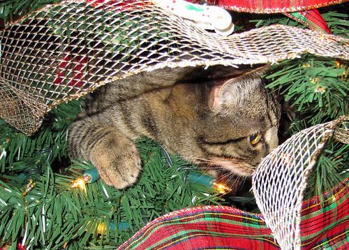 Kitten Tree
