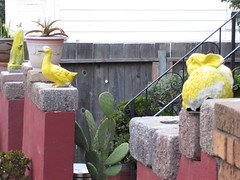I am curious as to why these are yellow (dschweisguth) Tags: sanfrancisco rabbit foundinsf