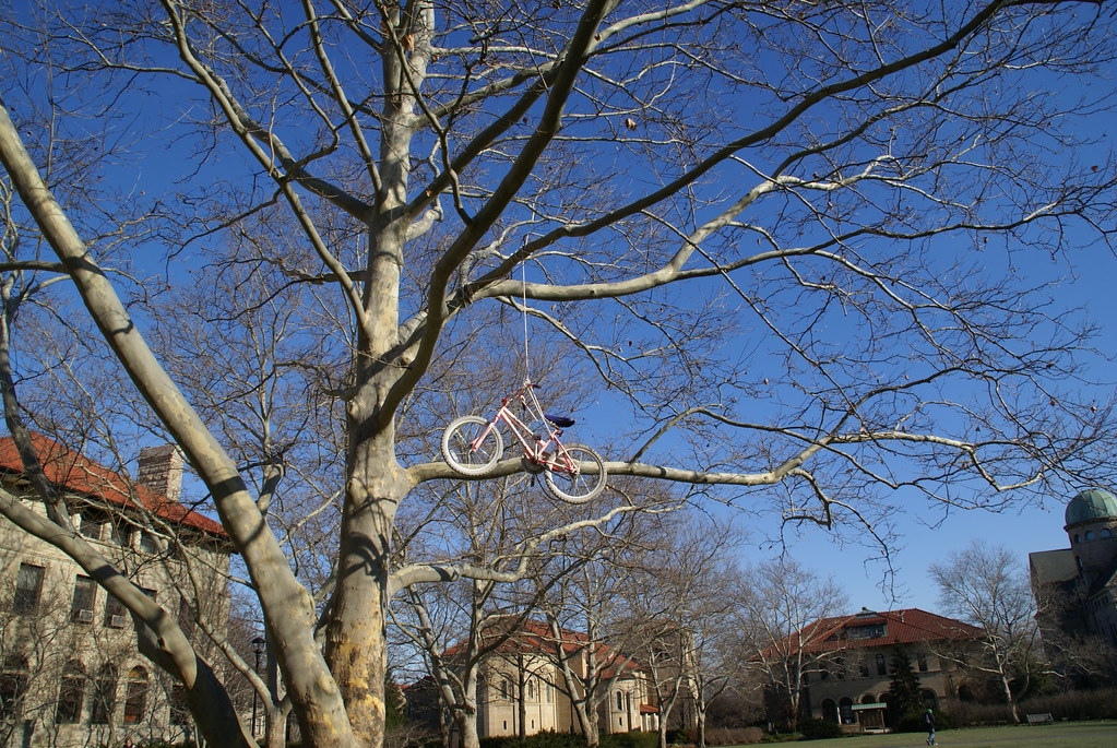 A bike hangs from a tree