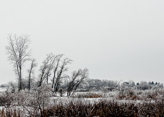 A Frozen World (Alex Ragnar Photography) Tags: trees winter white cold ice landscape frozen raining christmaseve sparse newburg