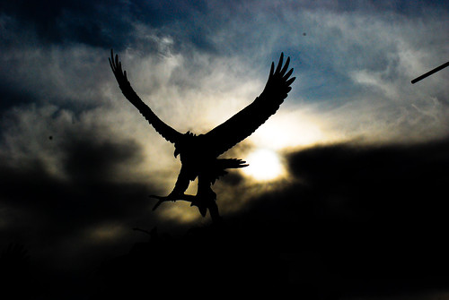 Eagle against sky (1 of 1)