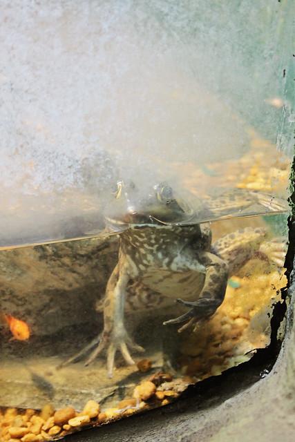 MODS frog