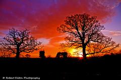 Painted Sky Silhouette (Rob Felton) Tags: light sun tree silhouette sunrise bedford bedfordshire felton rise cardington robertfelton eos7d