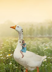 242/365 (Jessie Rose Photography) Tags: goose mothergoose nurseryrhyme fantasy photomanipulation photoshop tinyperson theborrowers 365 365project 365challenge