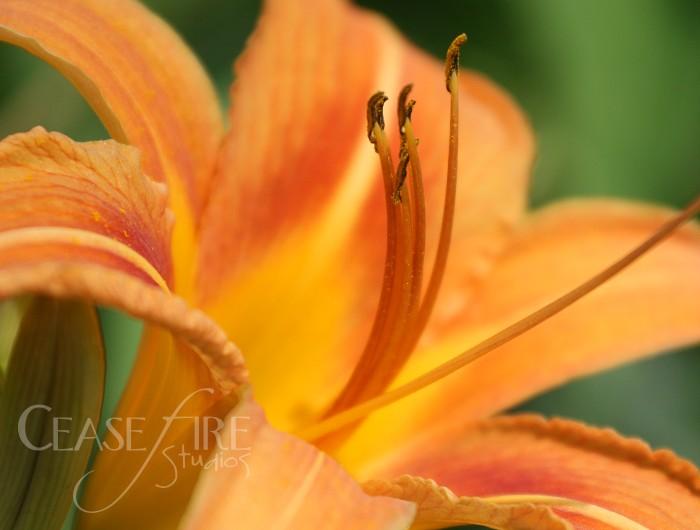 06-26-flowers4