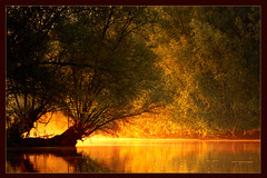 Morning has broken (hvhe1) Tags: morning light sun lake nature water fog creek sunrise gold nationalpark bravo swamp rivers omg biesbosch wetland amer drimmelen anawesomeshot impressedbeauty infinestyle