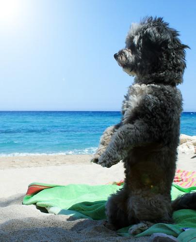 Foto cane divertente a 2 zampe sulla spiaggia in Sardegna