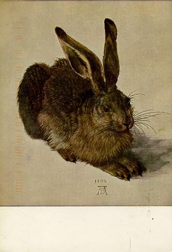 durer_hare